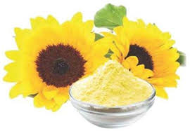 sunflower-lecithin-powder.jpg